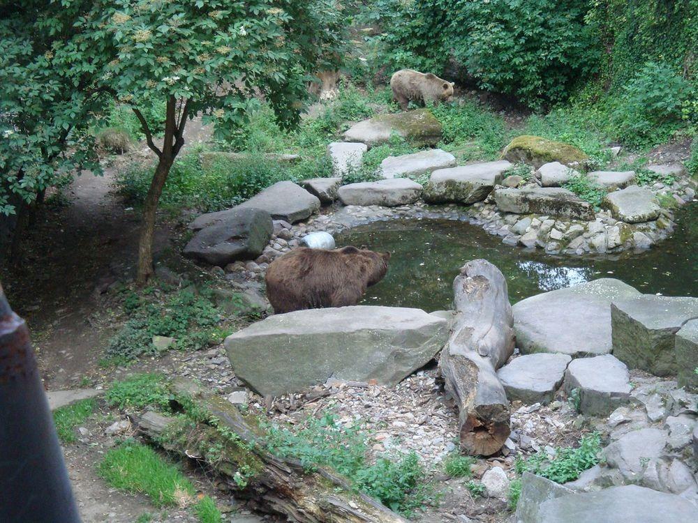 cesky-krumlov-castle-bears-5