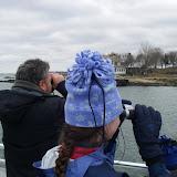 Seal Cruise - seal27.jpg