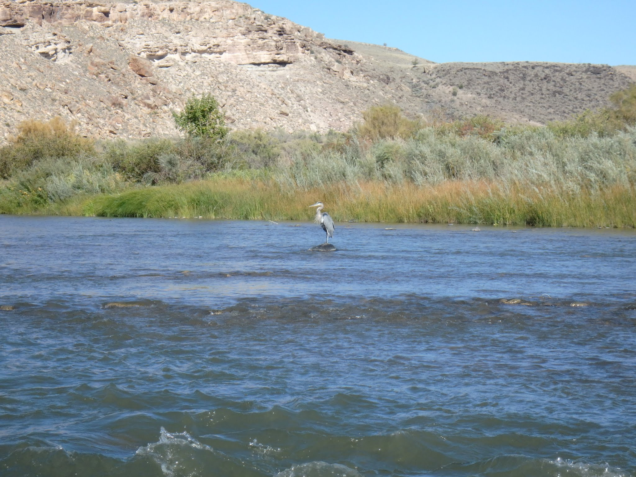 Gunnison river 09 27 2016 dave weller 39 s fly fishing blog for Gunnison river fly fishing