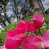 Gardening 2013 - 115_5725.JPG