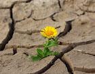 Milagro flor en tierra seca