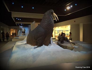 Polar Culture