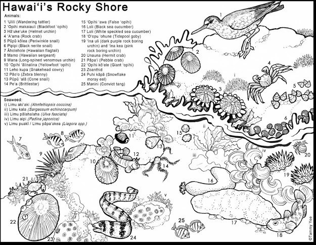 Unbelievable Tide Pool Animals Coloring Pages For Kids With Hawaiian  Coloring Pages And Hawaiian Coloring Book