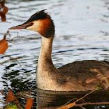 Vogels en dieren - IMG_9136.JPG