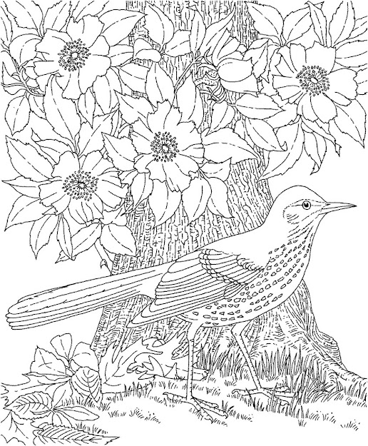 Coloring Pages For Adults Wallpapers Coloring Pages For Adults Images  Desktop High Definition Wallpapers