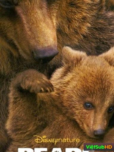 Cuộc Sống Nhà Gấu Nâu