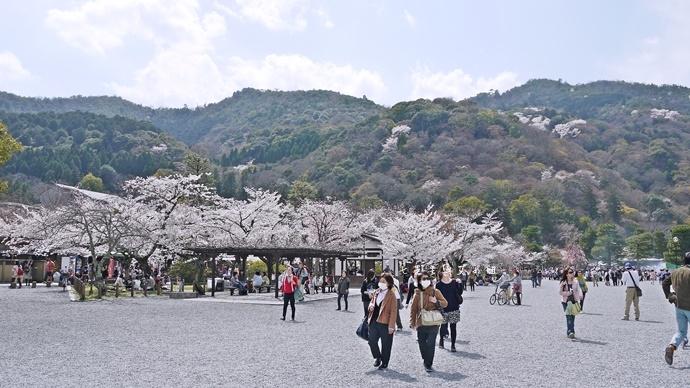 26 京都 嵐山渡月橋 賞櫻 櫻花 Saga Par 五色霜淇淋 彩色霜淇淋