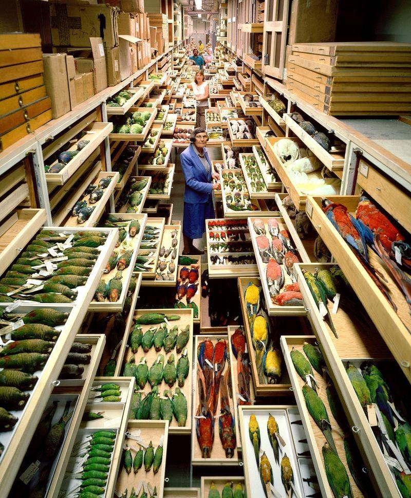 di storia naturale-museo-collezione-2