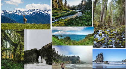 Fun Things To Do In Washington State
