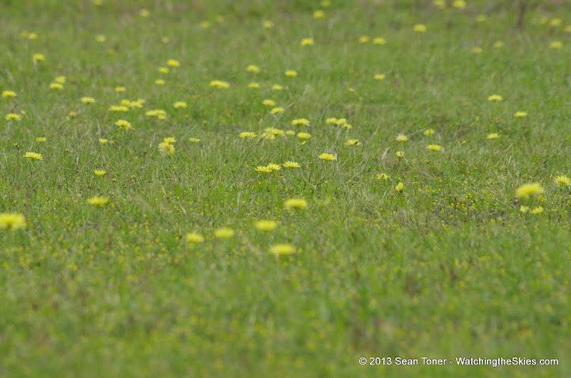 2013 Spring Flora & Fauna - IMGP6368.JPG