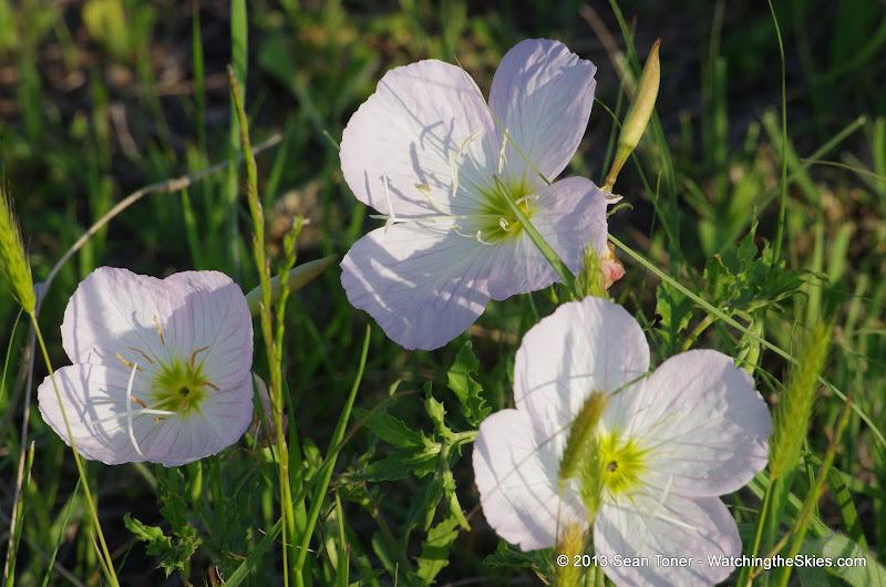 2013 Spring Flora & Fauna - IMGP6397.JPG