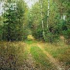 Белогорье - Заповедник лес на Ворскле 020.jpg