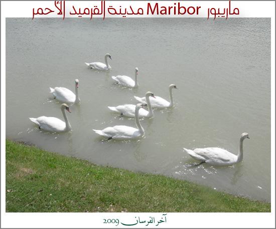 ماريبور