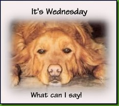 its-wednesday-what-can-i-say-dog-graphic