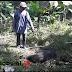 Pria di Sukabumi Tewas Diserang Babi Hutan