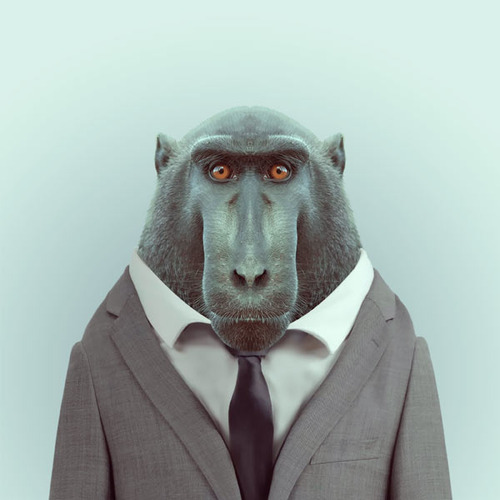 *Zoo Portraits動物時尚秀:正經八百時裝篇! 1