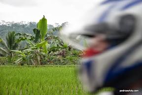 Pola ryżowe na środkowej Jawie