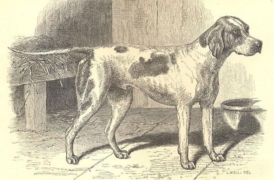 Những giống chó đầu tiên trên trái đất