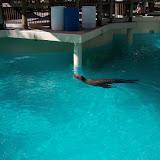 Houston Zoo - 116_8372.JPG
