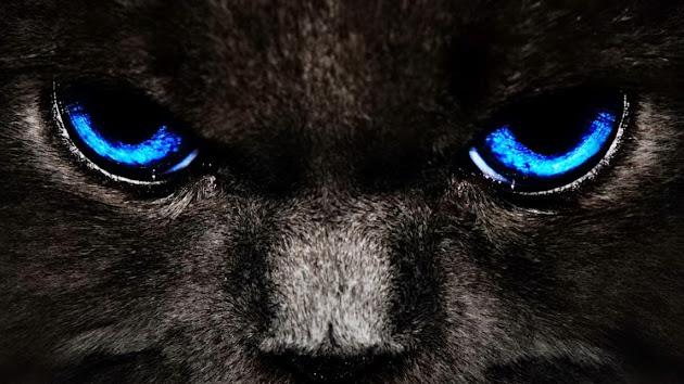 Cats Eyes Chevrolet