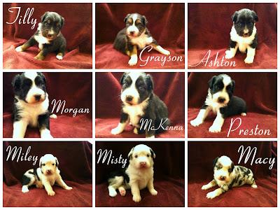 **November 2014 Puppies!!**