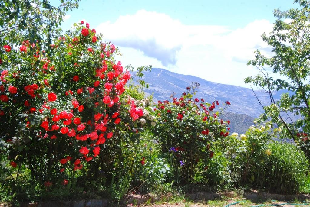 3-Rosas-Vistas
