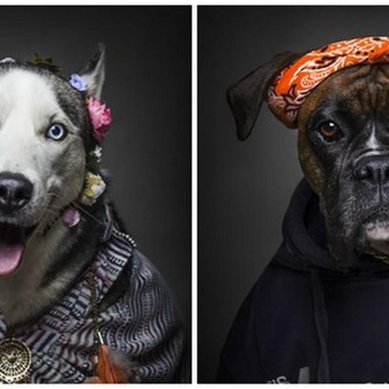 Если бы собаки были людьми…