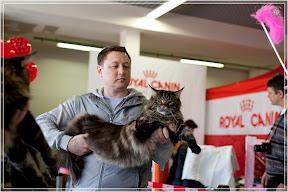 cats-show-24-03-2012-fife-spb-www.coonplanet.ru-095.jpg