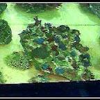 1997 - MACNA IX - Chicago - macna080.jpg