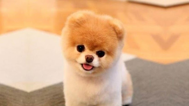 Chú chó May Mắn