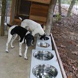 Fall 2012 - puppy3.jpg