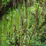 Dans la forêt. Las Juntas, 1400 m (Carchi, Équateur), 4 décembre 2013. Photo : J.-M. Gayman