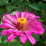Gardening 2014 - 116_3426.JPG