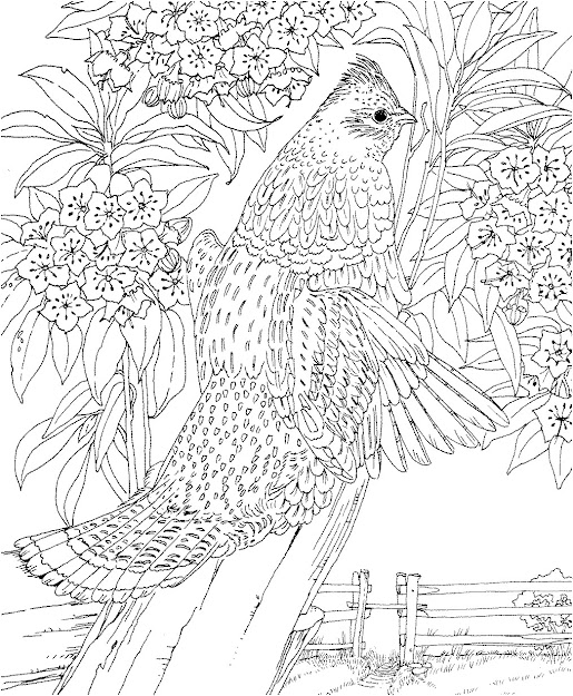 Dont Forget To Share Difficult Animals Coloring Pages For Adults On  Throughout Hard Coloring