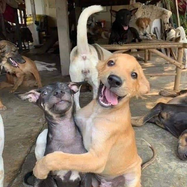 Tratando bem os animais e as pessoas