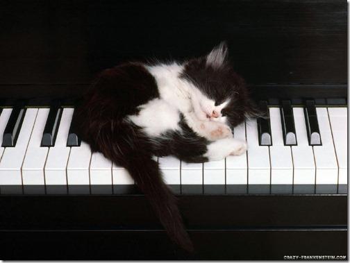 22 fotos de gats (9)
