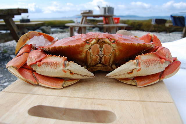 A crab waiting to be enjoyed at an outdoor picnic at Taylor Shellfish Farm. / Credit: Bellingham Whatcom County Tourism