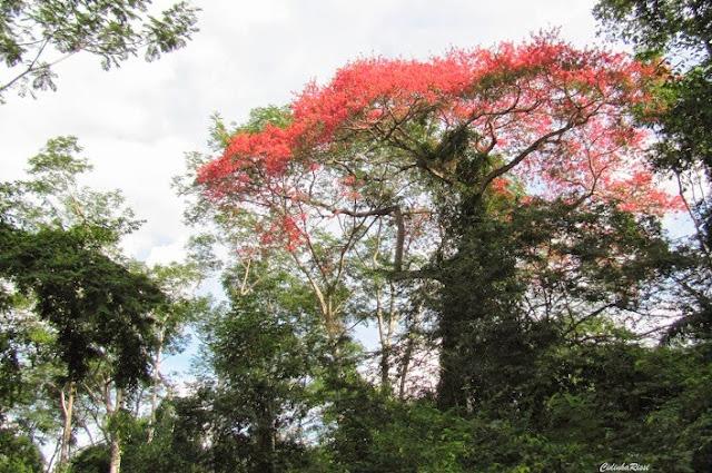En forêt, environs de Colider (Mato Grosso, Brésil), 29 avril 2012. Photo : Cidinha Rissi