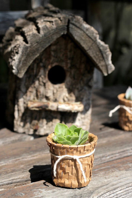 Recycled K Cup Succulent Pots - homework (4)