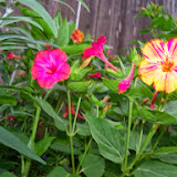 Gardening 2014 - 116_1959.JPG