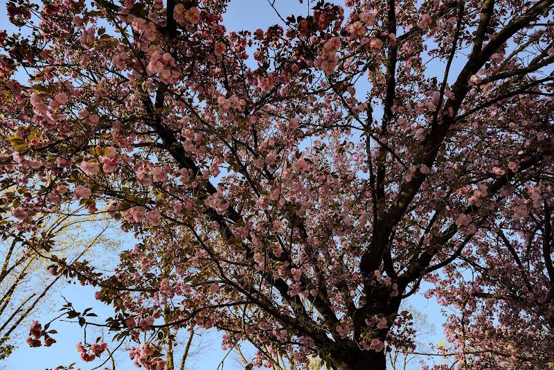 Trionfo di primavera di Inazur