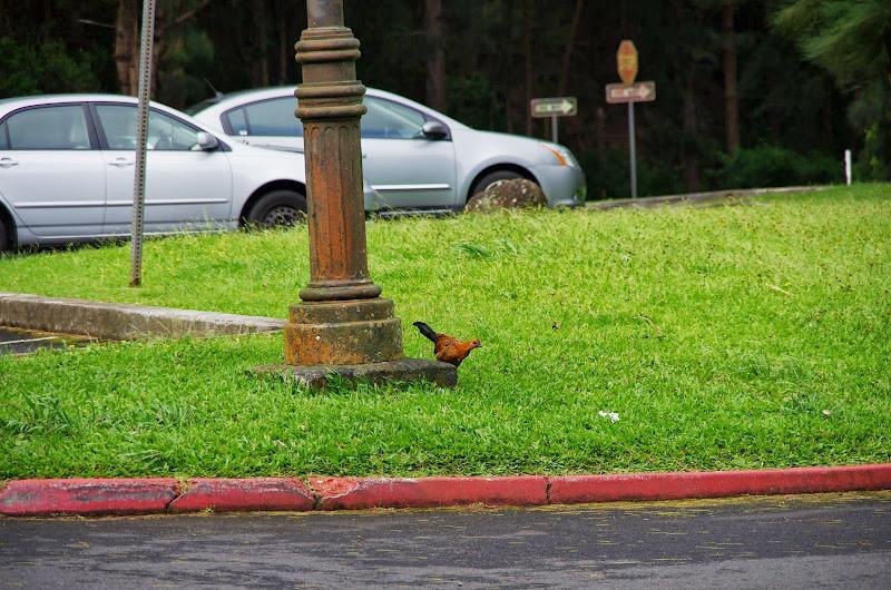 06-18-13 Waikiki, Coconut Island, Kaneohe Bay - IMGP6975.JPG