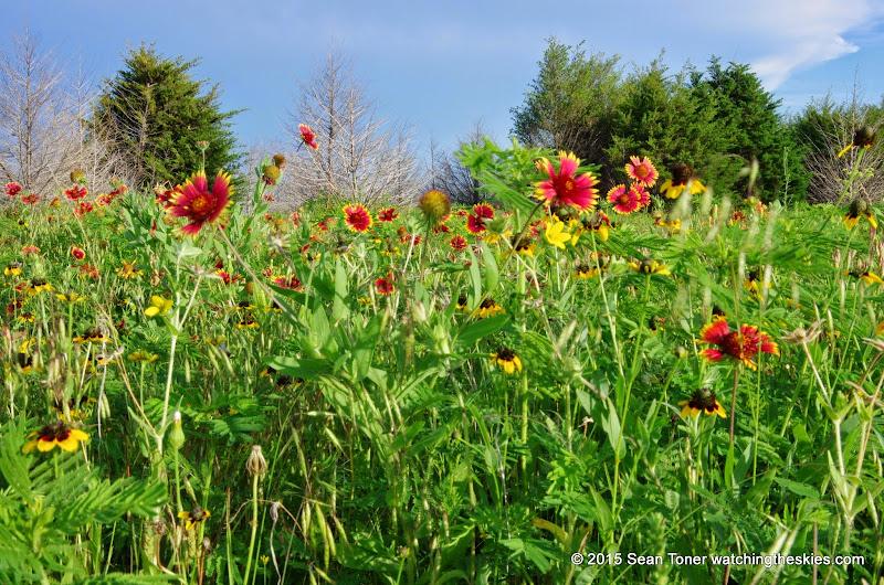 05-26-14 Texas Wildflowers - IMGP1400.JPG