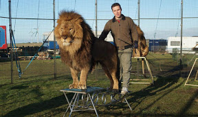 Pressure mounts to stop animal circus