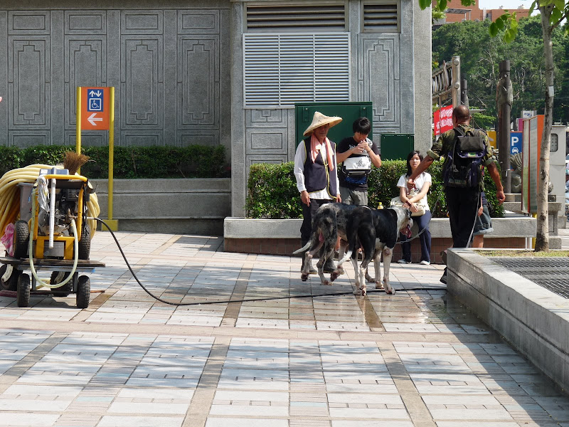 TAIWAN Taipei autour de Longshan Temple - P1120511.JPG