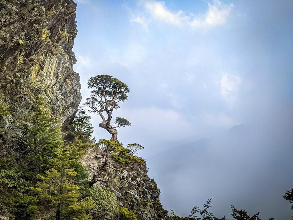 武陵四秀──池有名樹