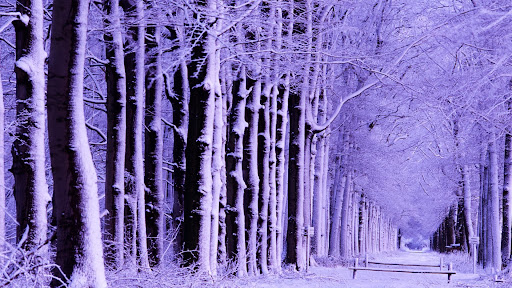 Winter Forest.jpg