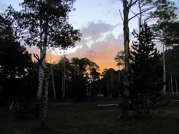 Sunset through the aspens