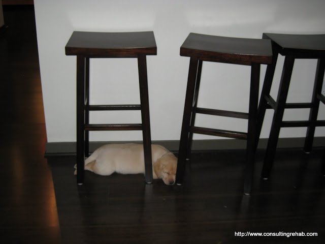She was trying to walk through the stools and fell down, then she just decided to stay down and sleep for 30 minutes