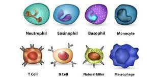 Our immune cells are